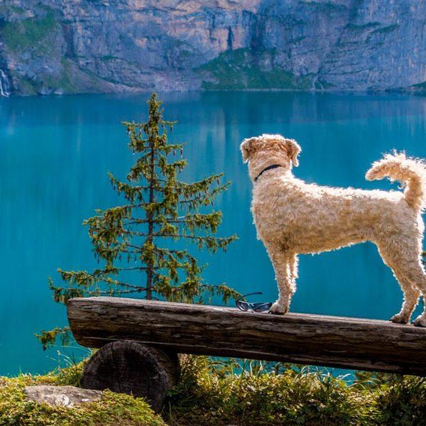 Las mascotas tendrán que tener la vacuna antirrábica para poder viajar