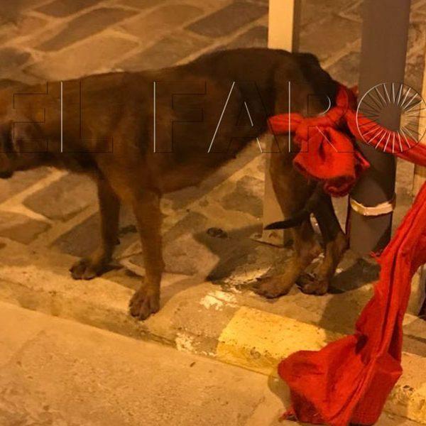 confirmado caso de rabia en Melilla 2