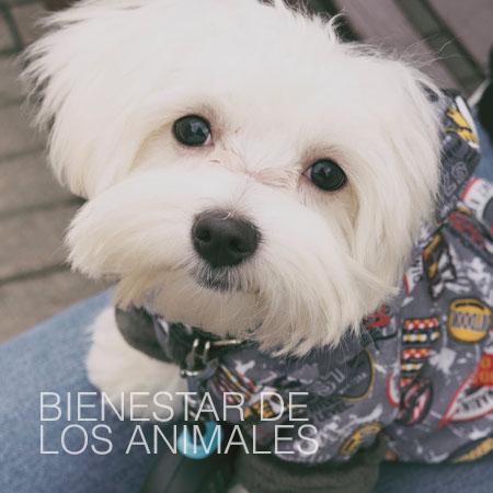 Bienestar de los animales - Melilla